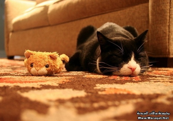 cats-and-toys8