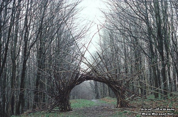 land-art-nature-9
