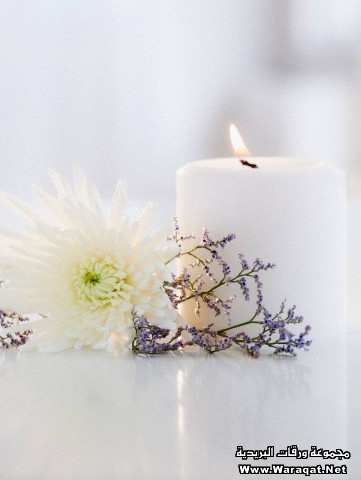 USA, New Jersey, Jersey City, Candle, aster flower and lavender