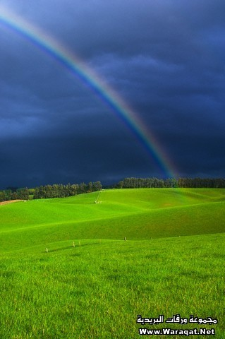 Rainbow and Storm Clouds Above Pastureland