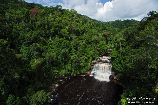 An aerial view of the Maliau River with Maliau Falls in Maliau Basin, Sabah, Borneo, East Malaysia.