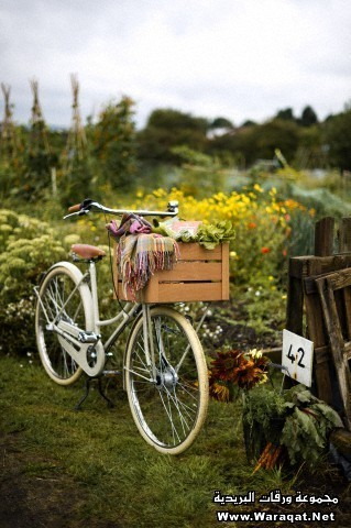 Bicycle in allotment