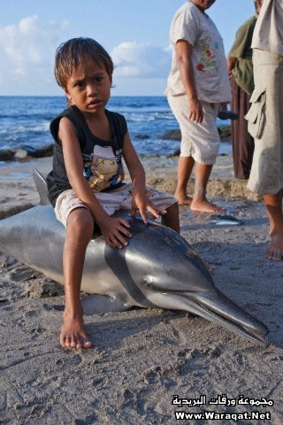 A boy with a dead dolphin on the beach, in Lamalera, Lembata Island, Eastern Indonesia.
