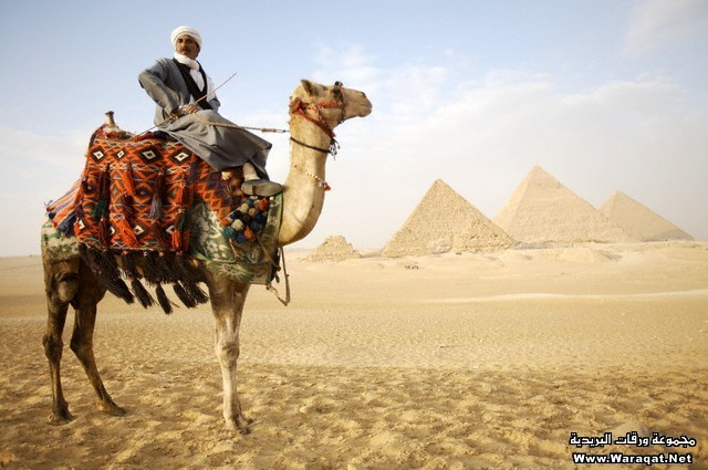Man Sitting on Camel in Front of Pyramids of Giza