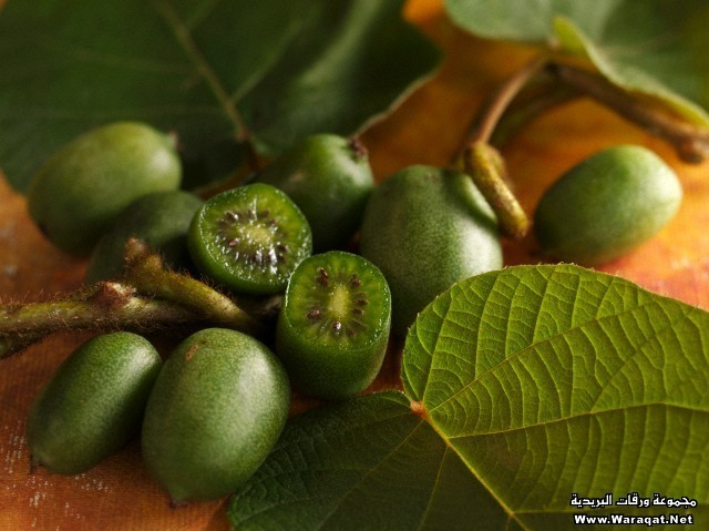 Mini kiwis with leaves