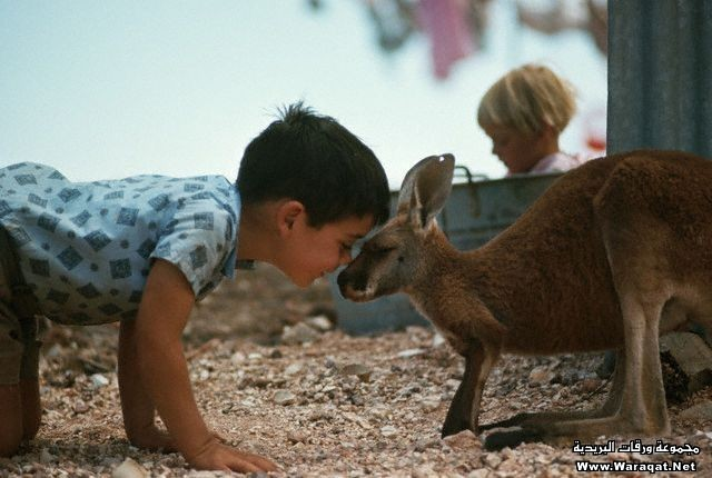 Boy with a Pet Kangaroo