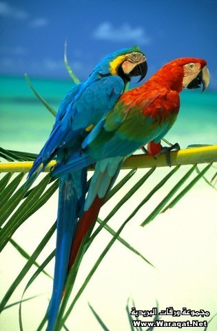 Parrots by Beach