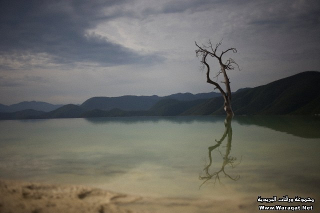 Reflexion of a dry tree and a mountain in Hierve el Agua natural pool in Oaxaca, Mexico.