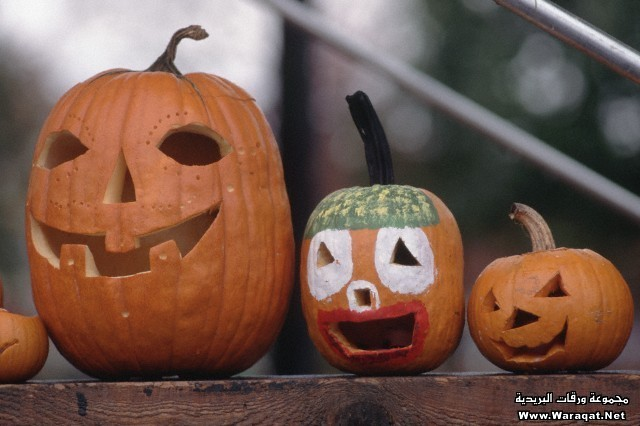 Three Jack O'Lanterns at Harvest Festival