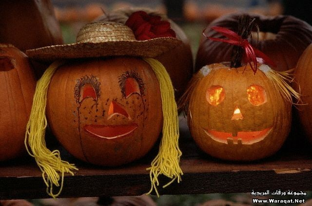 Jack O'Lanterns for Harvest Festival