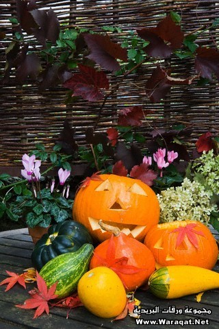 Jack-O-Lanterns and Gourds