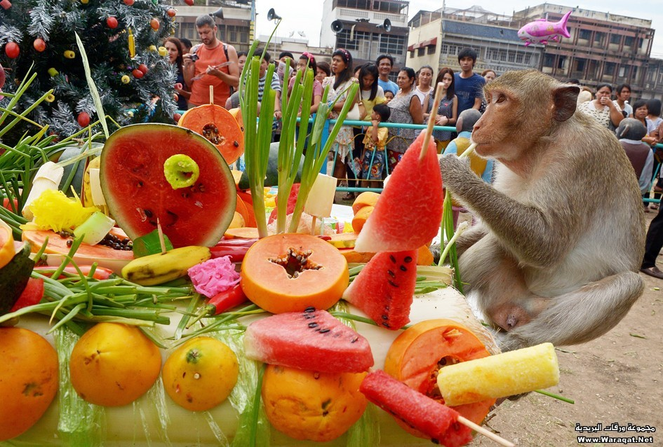 THAILAND-FESTIVAL-ANIMAL-MONKEY